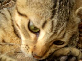Menorca's cats I by Lyuba