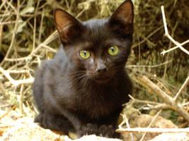 Menorca's cats II by Lyuba