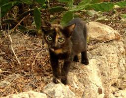 Menorca's cats III by Lyuba