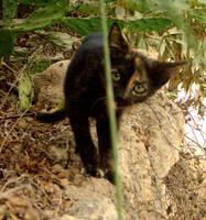 Menorca's cats IV by Lyuba