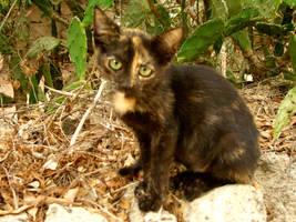 Menorca's cats V by Lyuba