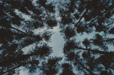 Forest in Jodlowo