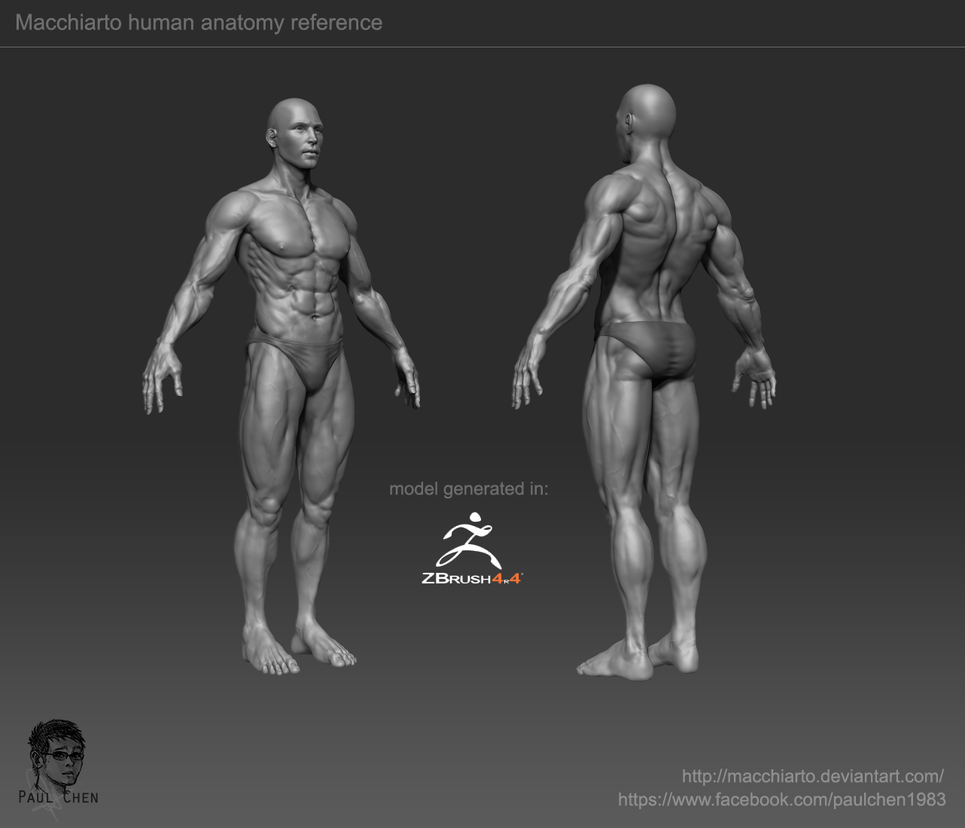Male Human Anatomy By Macchiarto On Deviantart