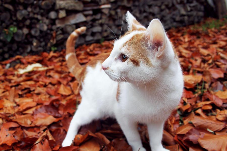 Autumn by RosingsPark