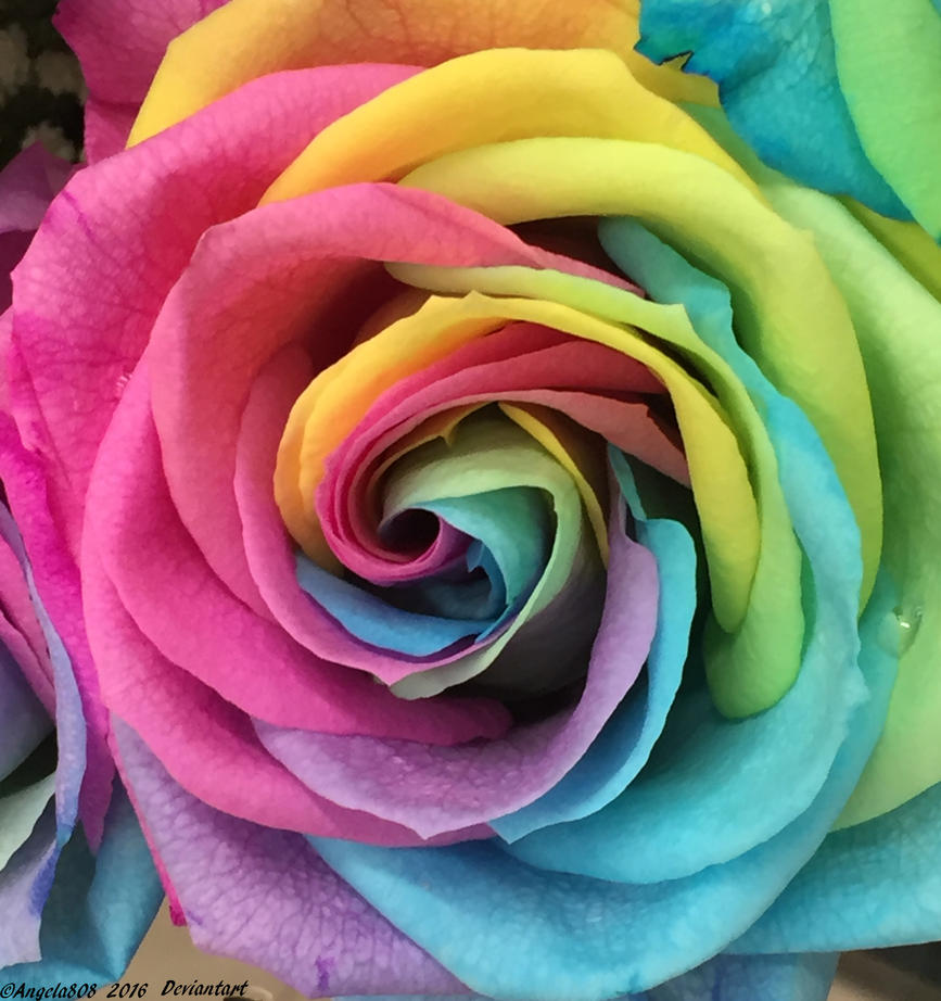 Rainbow rose 8 by angela808 on deviantart for Where can i buy rainbow roses