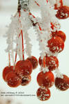 Frosted Cherries