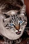 Meow by AngelAr-Feiniel