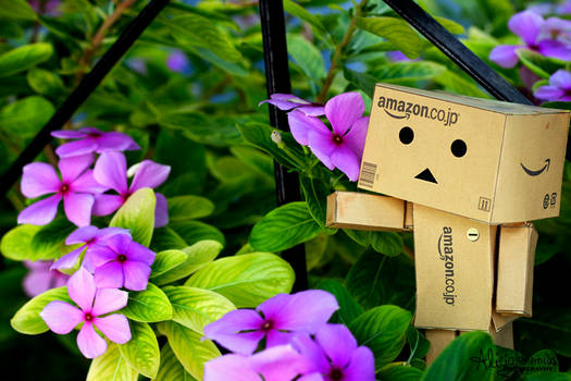 There Danbo