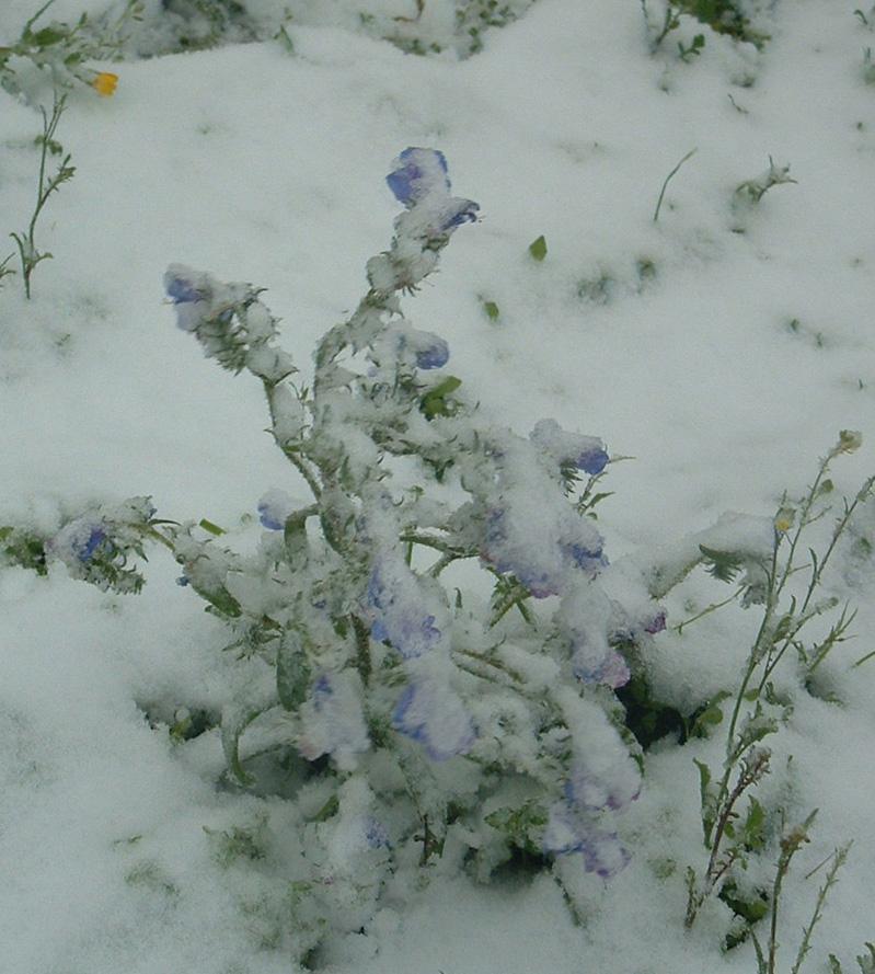 flor nevada wallpaper > flor nevada Papel de parede > flor nevada Fondos