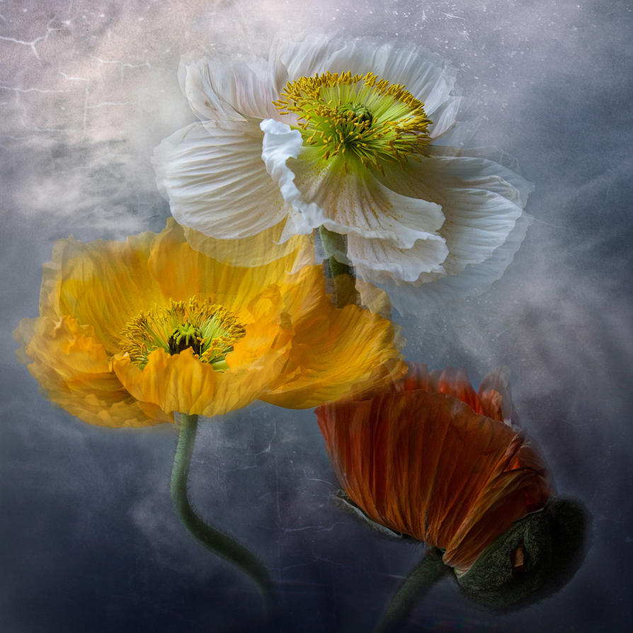 Blumenkunst by Bildmalerin
