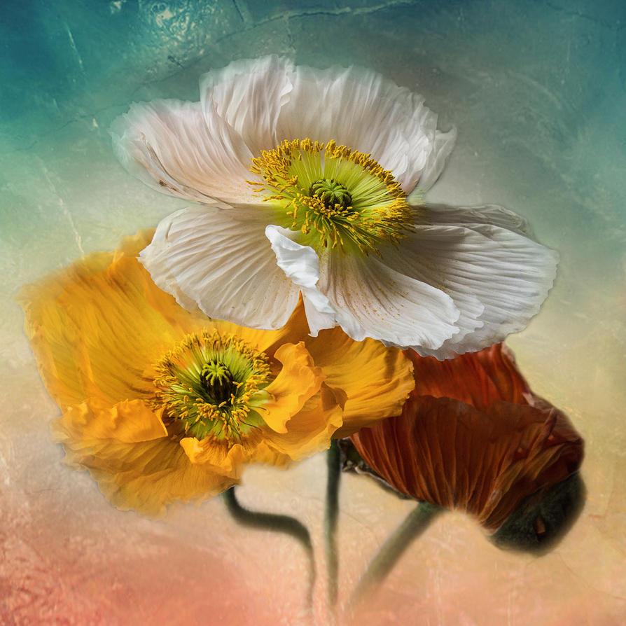 Koloriert by Bildmalerin