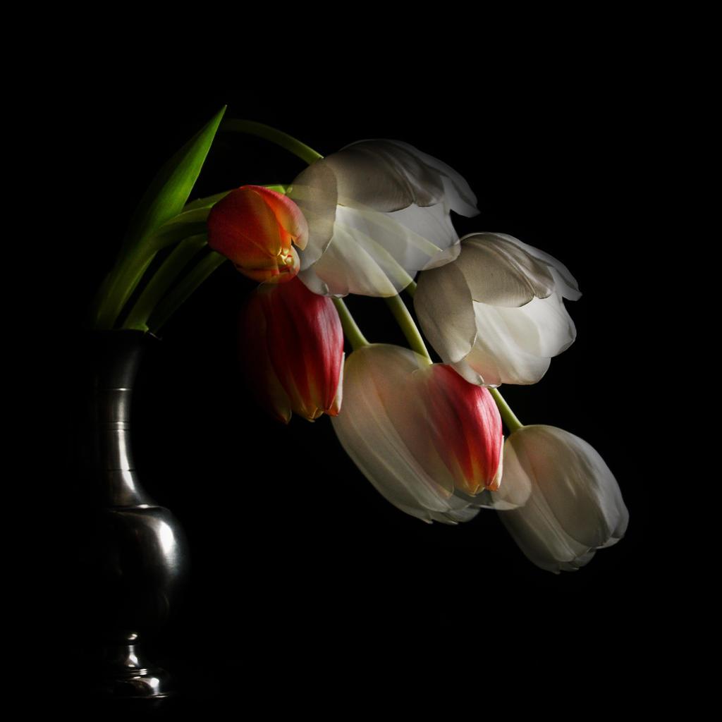 Tulpen Fantasien by Bildmalerin