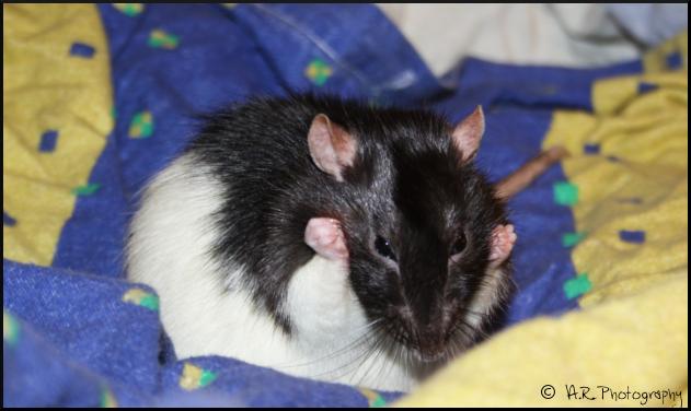 Bouh, un gros rat ! It__s_the_bath__s_time_by_anaroots-d4vsm57