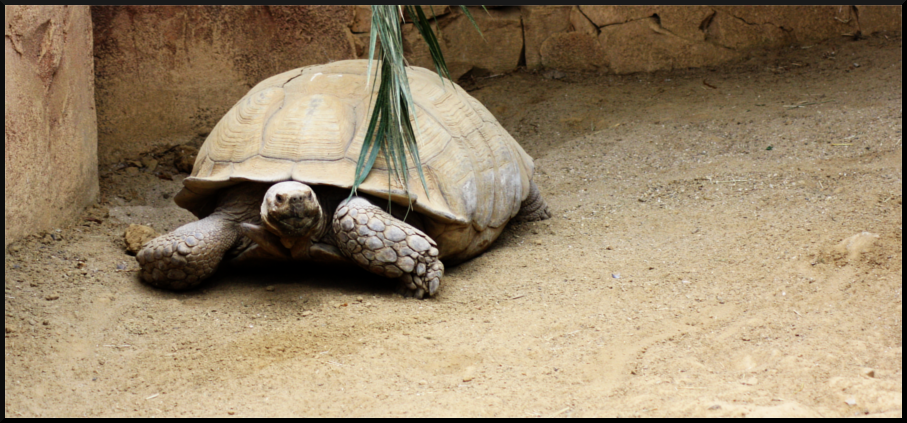 Soyons original... ♥ Tortue_by_anaroots-d6cnmap