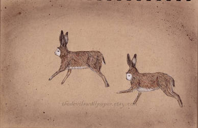 hares by TheDevilsWallpaper