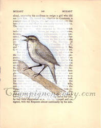 mozart chiffchaff by TheDevilsWallpaper