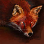 Doodle 092 - Red Fox