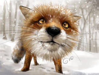 Doodle 121 - Red Fox Close Up by giovannag