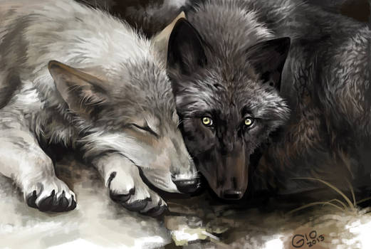 Wolves portrait or Are you awake?