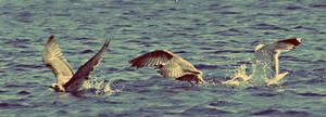 Sea Birds by Schoggii