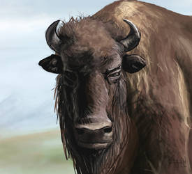 Buffalo Speed paint