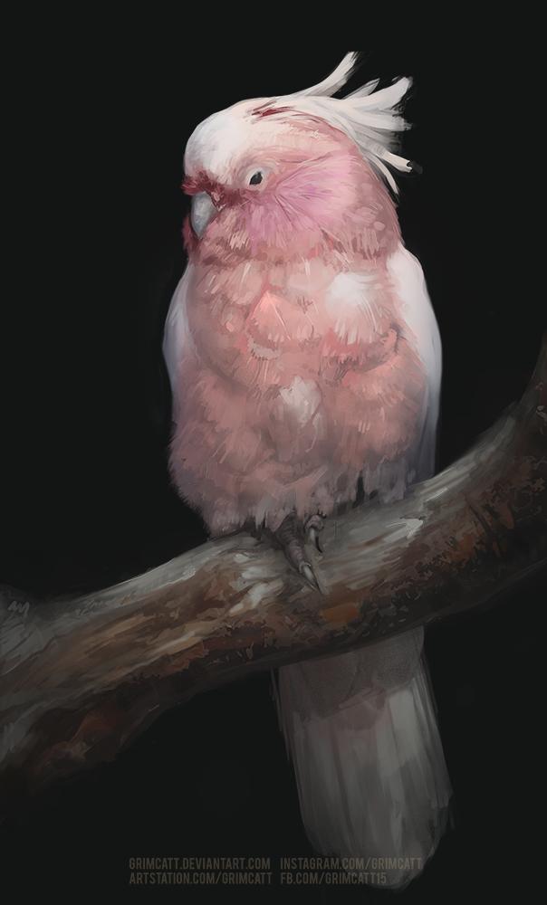 Birdo study by grimcatt