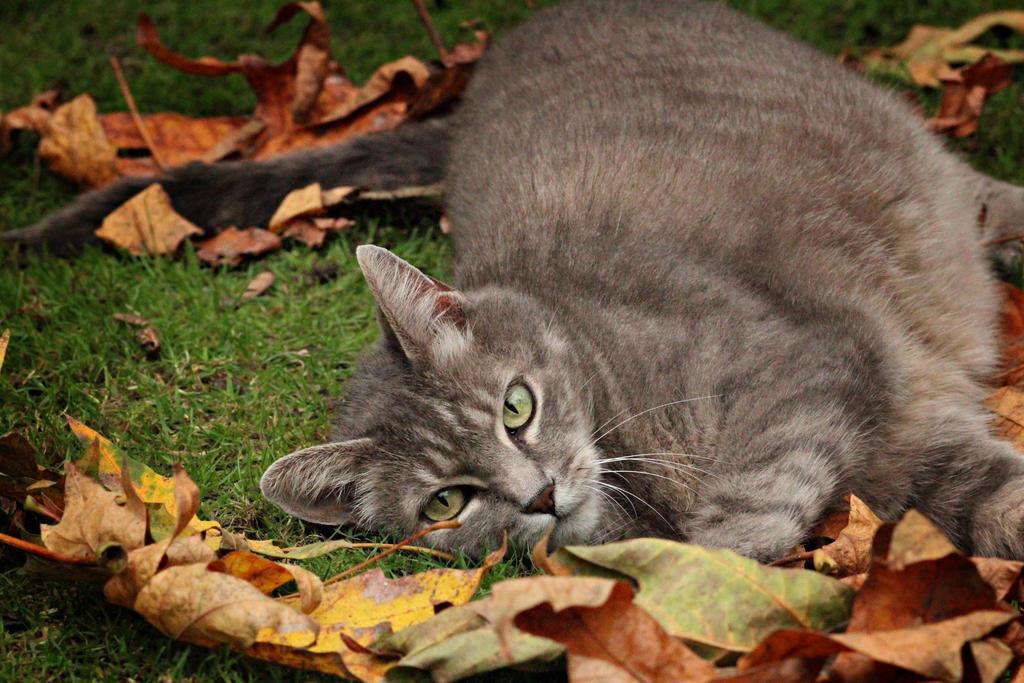 Enjoying Fall by FrancesColt
