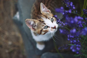 Cat2 by madzia530