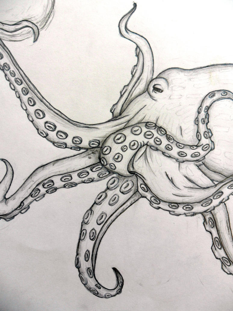 Line Art Octopus : Realistic octopus by letmelivelovedraw on deviantart