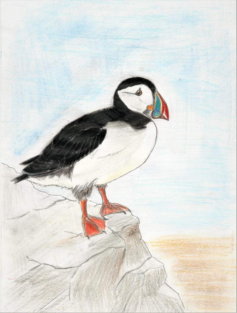 Atlantic puffin by ComtePatatas