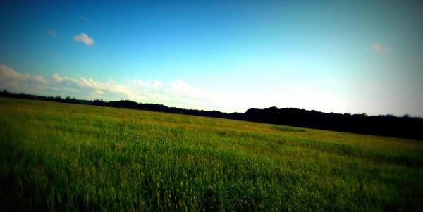 Field Of Life II by anarae22