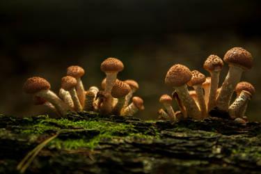tiny little world... (part 2) by pijnapple