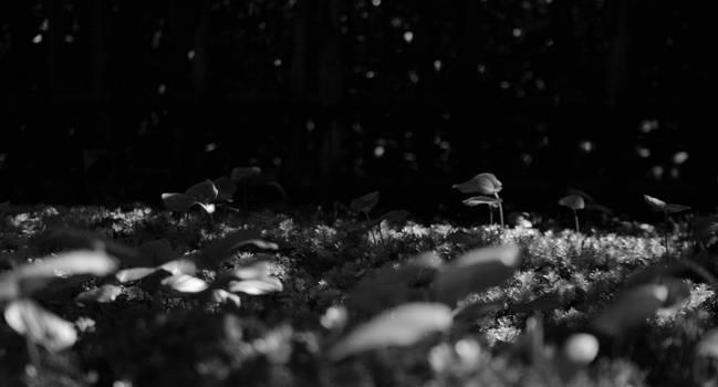 Woodsgrouds Bw by Svorane