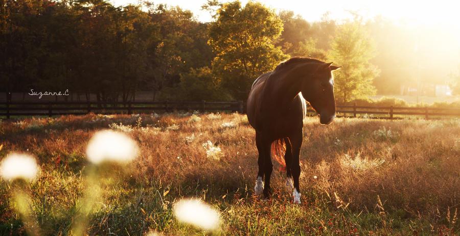 Heaven's Pasture by braidsandarrows