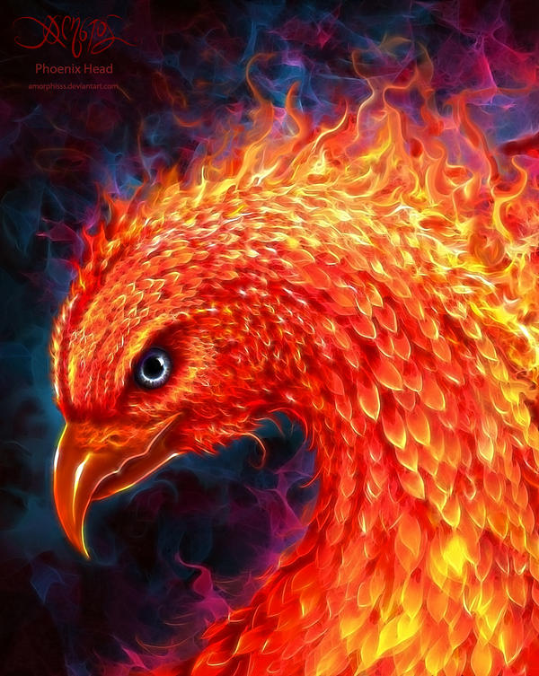 Phoenix Head by amorphisss