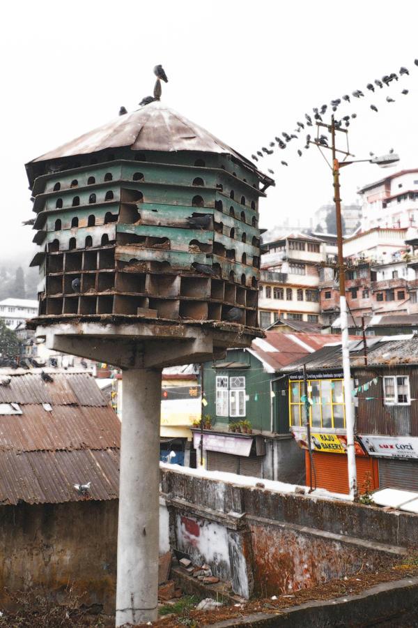 Birdhouse (Darjeeling, India) by drewhoshkiw