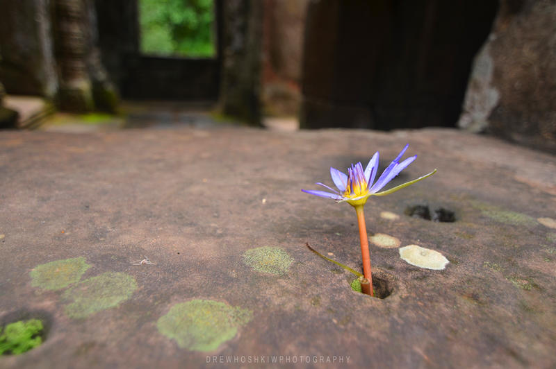 Temple flower by drewhoshkiw