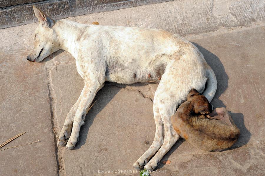 Sleeping Dogs by drewhoshkiw