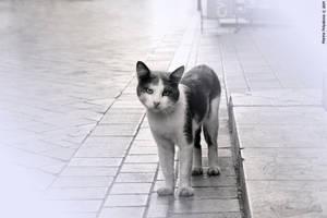 Yalta Cat by Alexandra-Rei
