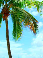 Palm Tree by remembermywords