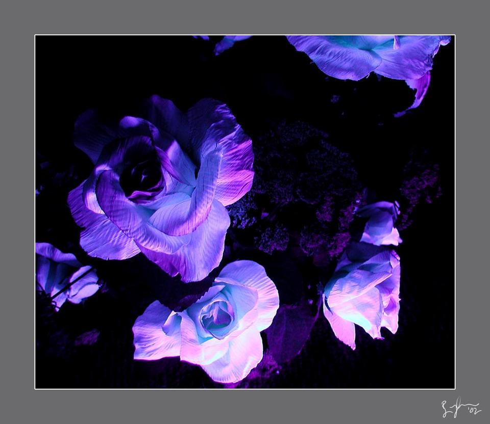 black light flowers by kuso