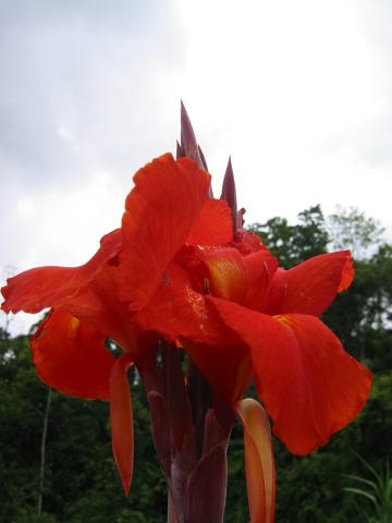 Costa Rica 5 by kuso