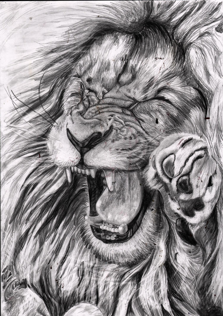 Lion Drawing by shadathchy on DeviantArt