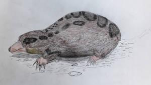 Docofossor brachydactylus by paleosir
