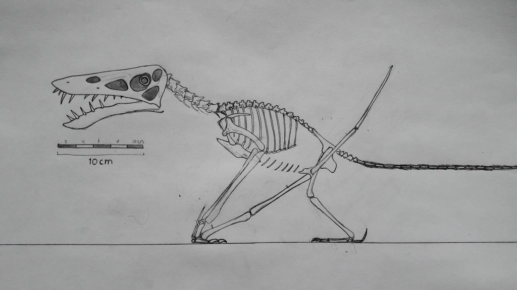 Jianchangnathus robustus skeletal reconstruction. by paleosir
