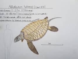 Maastricht formation: Allopleuron hofmanni by paleosir