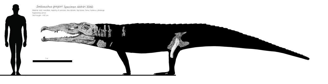 Smilosuchus gregorii schematic
