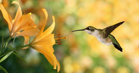 Hummingbird hovering by LoverPrints