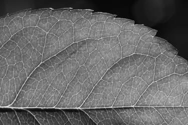 Glowing Veins by LydiaRhianne
