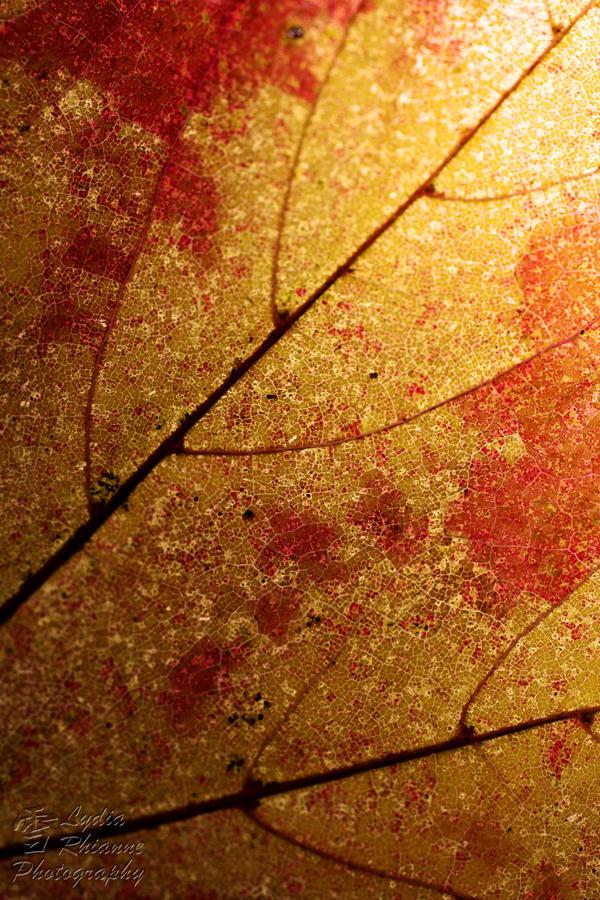 Fall Infection by LydiaRhianne
